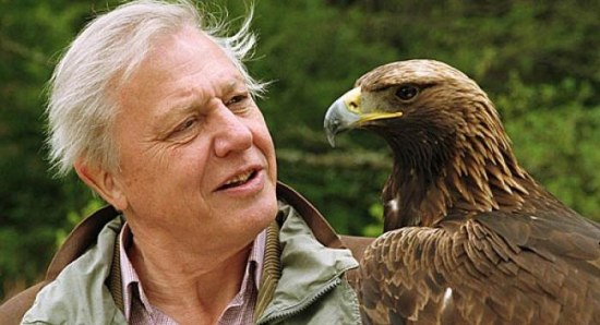 David Attenborough on one of his many shows
