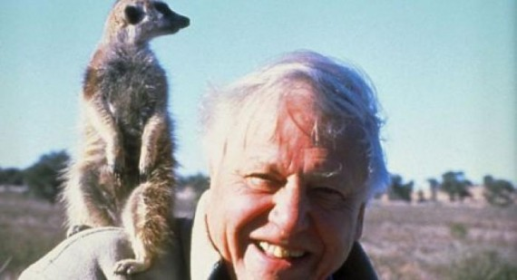 David Attenborough slams the human race